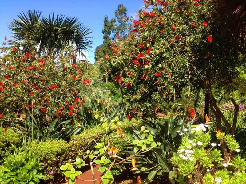 Ferienhaus Azoren mildes Klima